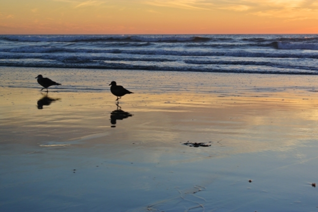 Seagulls (CA, USA)
